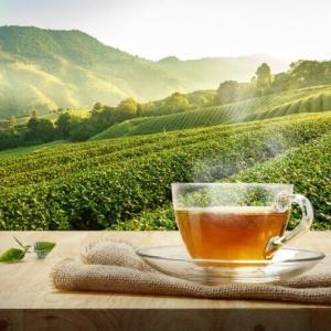 日本茶の歴史は?時代ごとの流れを解説!始まりから輸出や機械化まで
