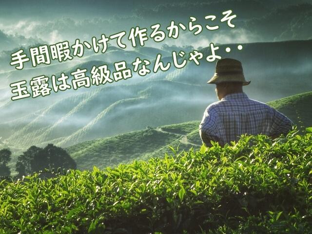玉露が最高クラスの緑茶になる理由